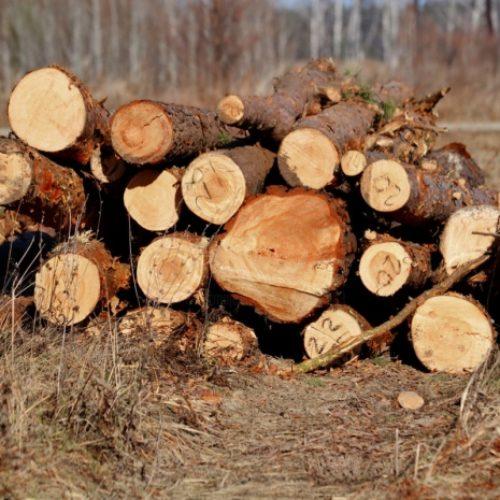 Незаконную вырубку леса выявили полицейские Акмолинской области